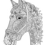 Adult Coloring Horses Inspirational 443 Best Coloring Horses Images In 2017