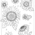 Adult Flower Coloring Pages Elegant Advanced Coloring Pages Flowers