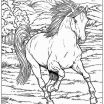 Adult Horse Coloring Pages Excellent Lovely Horse with Saddle Coloring Pages – Kursknews