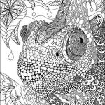 Advanced Coloring Books Awesome Peacock Coloring Page Lovely Advanced Peacock Coloring Pages New