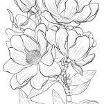 Advanced Coloring Pages Flowers Elegant Best Real Life Flower Coloring Pages – Howtobeaweso