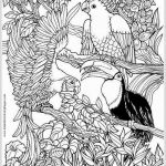 Angry Bird Coloring Books Amazing 10 New Bird Coloring Pages