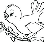 Angry Bird Coloring Page Creative Birds Colouring Pages – Sharpball
