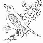 Angry Bird Colouring Pretty Free Angry Birds Coloring Pages Luxury Bird Coloring Pages 40free