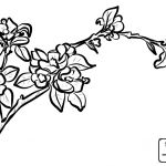 Apple Blossom Shopkin Best Apple Blossom Line Drawing at Getdrawings