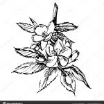 Apple Blossom Shopkin Marvelous Apple Blossom Drawing at Getdrawings