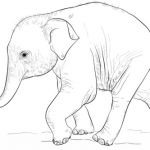 Baby Elephant Color Pages Beautiful Cute Baby Elephant Coloring Page From Elephants Category Select