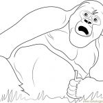 Bananas Beanie Boo Fresh 63 Gorilla Coloring Pages Free Aias