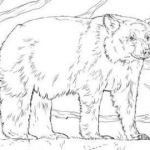 Bear Coloring Pages Beautiful √ Bear Coloring Pages and Printable Coloring Worksheets New