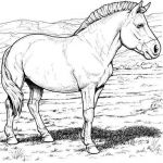 Breyer Horse Coloring Pages Pretty Part 6 Zootopia Judy Hopps Coloring Pages