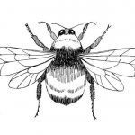 Bumble Bee Coloring Sheet Inspirational Bumble Bee Outline Free Download Clip Art Free Clip Art