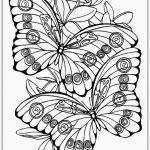 Butterfly Adult Coloring Pages Best Coloring Awesome Cool Adult Coloring Books Color Pages butterfly
