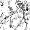 Cardinals Coloring Page Inspirational Cardinal Drawing 12 Best Art with Kids Birds In Pastel