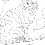 Cat Coloring Pages for Adults Best Of Cats Coloring Pages