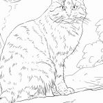 Cat Coloring Pages Free Excellent Free Printable Coloring Sheets Best Free Printable Coloring
