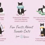 Cats and Kittens Coloring Books Inspiration 8 Fun Facts About Tuxedo Cats