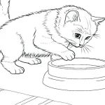 Cats and Kittens Coloring Books Inspiration Kitten Color Pages – 488websitedesign