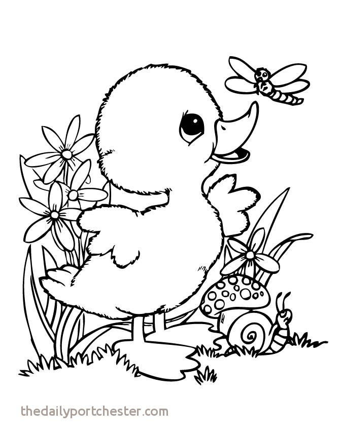 Coloring Animals for Adults Elegant 15 Fresh Irish Coloring Pages