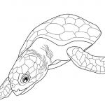 Coloring Book Sea Animals Elegant Beautiful Hawksbill Sea Turtle Coloring Pages – Howtobeaweso