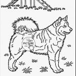 Coloring Pages 101 Marvelous Arts Dog Coloring Pages Fab ¢–· Husky Coloring Pages Beautiful