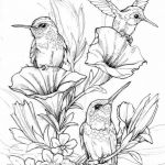 Coloring Pages Of Birds and Flowers Amazing Flying Bird Coloring Page Luxury Audubon S Birds America Coloring