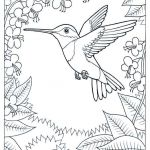 Coloring Pages Of Birds and Flowers Beautiful Humming Bird Coloring Pages Coloring Pages Pinterest