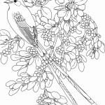 Coloring Pages Of Birds and Flowers Creative Luxury Bird Branch Coloring Page – Nicho
