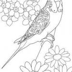 Coloring Pages Of Birds and Flowers Creative Parakeet Coloring Pages Art
