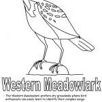 Complex Coloring Pages for Adults New Lovely north Dakota State Bird Coloring Page – Nicho