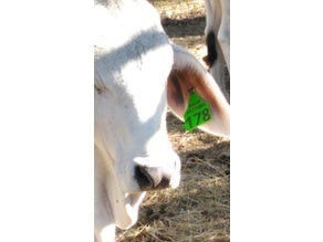 """Cow Print Stencil Awesome Things Tagged with """"cow"""" Thingiverse"""