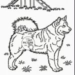 Cute Animal Coloring Pages Printable Wonderful Dog Coloring Pages Printable Beautiful Horse Printable Coloring