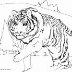 Cute Cat Coloring Pages Elegant Fresh Cute Cat Coloring Pages
