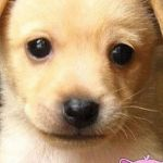 Cute Puppy Pictures to Print Awesome √ Drawing Dog and Cute Puppies Easy to Draw Puppy and