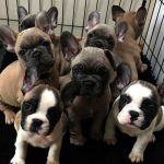 Cute Puppy Pictures to Print Unique Cute Animals Funny Videos Download after Cute Videos Wild Animals