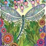 Dragonfly Coloring Book Elegant Amazon Bellabella by the Sea S Review Of Creative Haven