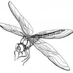 Dragonfly Coloring Book Elegant Dragonfly Coloring Page