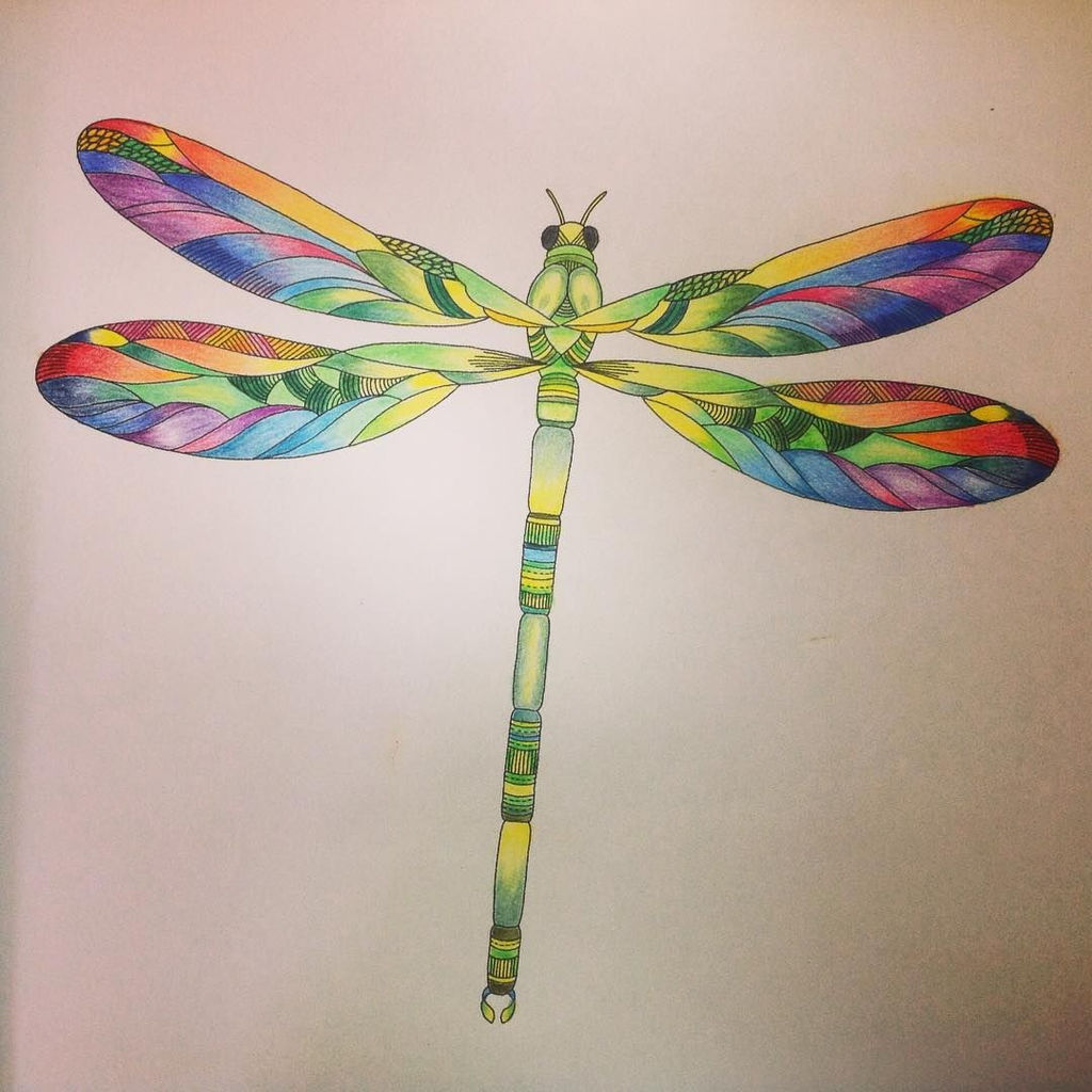 coloured pencil watercolour dragonfly