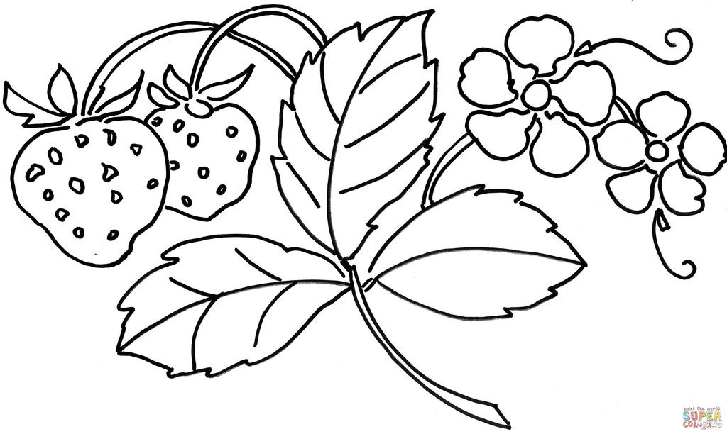 Dragonfly Coloring Book Marvelous Flower Coloring Book Pages