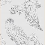 Dragons Pictures to Print New 24 Coloring Pages Birds Collection Coloring Sheets