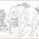 Elephant Coloring Book Pretty Elephant Drawing Elephant Coloring Book Tikwenglocho