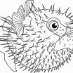 Fish Coloring Pages for Adults Awesome Fish Coloring Pages Beautiful Beautiful Fish Template New S S Media