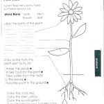Flower Coloring Pages Pdf Excellent Plant Coloring Pages – Architekturaxxifo