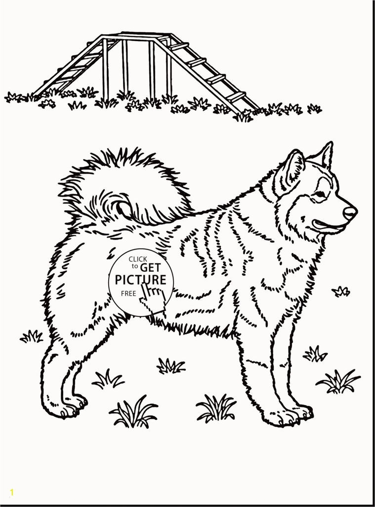 Free Horse Coloring Pages for Adults Elegant Baby Horse Coloring Pages