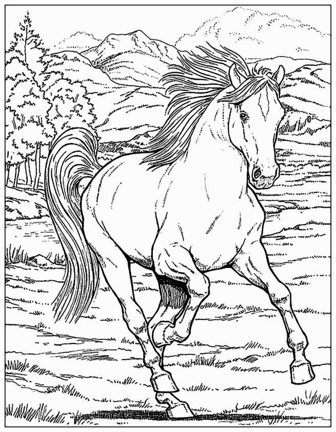 Free Horse Coloring Pages for Adults Elegant Best Girl Horse Coloring Page – Doiteasy