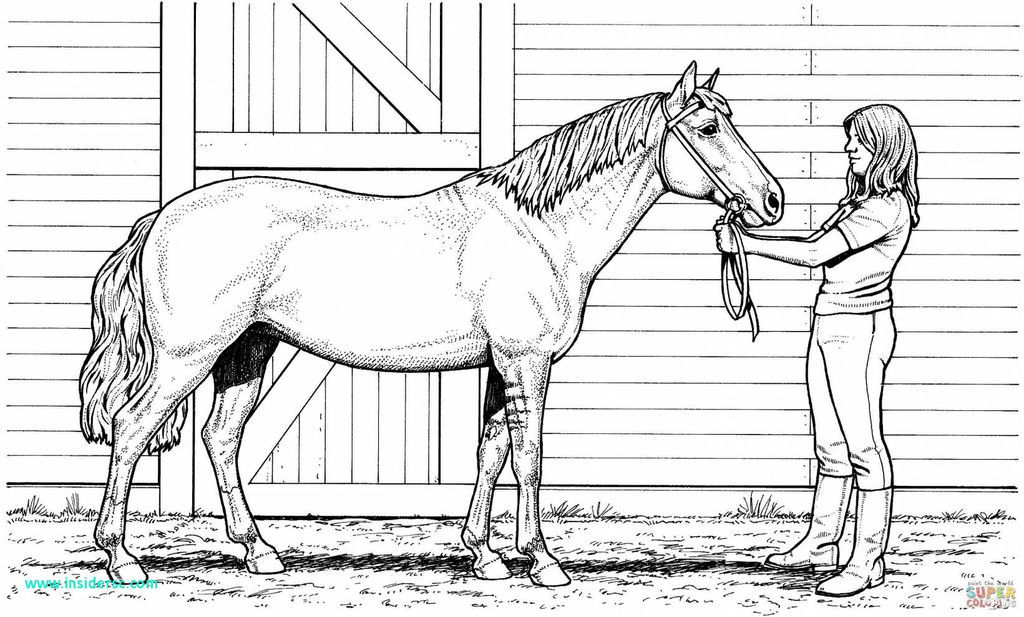 Free Horse Coloring Pages for Adults Excellent Unique Free Horse Coloring Page 2019