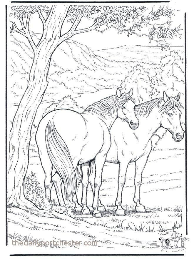 Free Horse Coloring Pages for Adults Exclusive Coloring Page Horse Beautiful Coloring for Free Best Color Page New