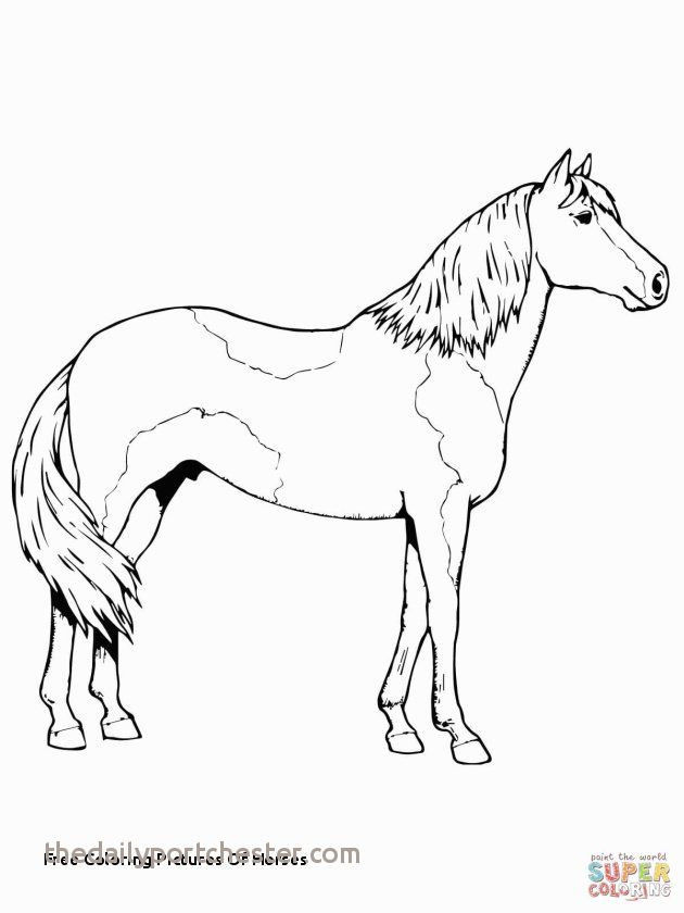 Free Horse Coloring Pages for Adults Inspiring Coloring Page Horse Beautiful Coloring for Free Best Color Page New