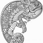 Free Mandalas to Color for Adults Amazing Stress Relief Coloring Pages Fresh 1 075 Free Printable Mandala