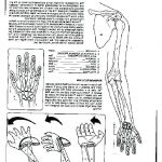 Free Printable Skull Coloring Pages Exclusive Anatomy Skeleton Coloring Pages to Print Unique Free Printable Human