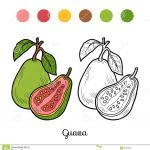 Fruit Coloring Book Creative Coloring Book Fruits and Ve Ables Guava Stock Vector